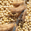 Stock Photo: Soy bean after harvest