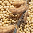Soy bean after harvest — Stock Photo #9651403