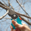 Pruning — Stock Photo #9701981