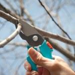 Pruning — Stock Photo #9701981