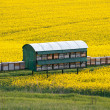 Stock Photo: Beekeeping with oilseed rapeseed