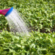 Royalty-Free Stock Photo: Watering can