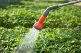 Watered seedling — Stock Photo