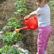 Girl watering  Seedling Tomato — Stock Photo