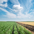Soybean field — Stock Photo #9765038