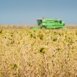 Combine harvesting soybeans — Photo