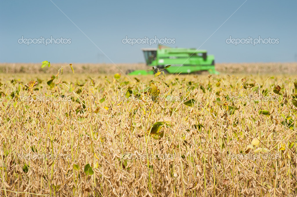 A farmer combines a field of soybeans — Stock Photo #9942638