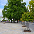 Trees on a town square — Stock Photo