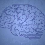 Computer style brain. — Stock Vector