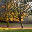 Autumn park trees - Stock Photo
