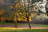 Autumn park trees — Stockfoto