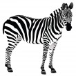 Stock Photo: Isolated Zebra