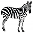 Isolated Zebra — Stock Photo