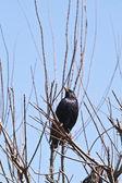 Bird on a bush — Stock Photo