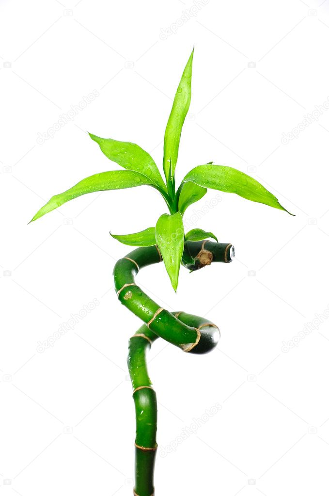 Green bamboo. Isolated over white background — Stock Photo #9601755