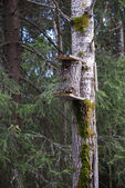 Wooden birdhouse. — Stock Photo