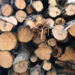 Logs of cut wood — Stock Photo