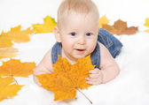 Little boy and maple leaf — Stock Photo