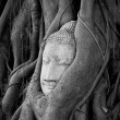 Head of Buddhunder fig tree in Ayutthaya — Stock fotografie #10344216