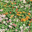 Stock Photo: Field of flowers.