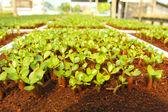 Seedlings — ストック写真