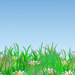 Stock Vector: Summer meadow background