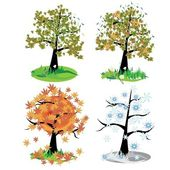 Four seasons - spring, summer, autumn, winte — Stock Vector