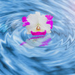 Orchid on the water - Stock Photo