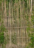 Заборы бамбуковые — Стоковое фото