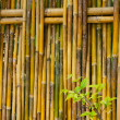 Bamboo fence — Stock Photo #9927401