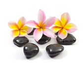 Spa stones and Frangipani flower — Stock Photo