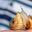 Royalty-Free Stock Photo: Two snails