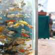 Fish aquarium on a market - 