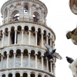 Pigeon lands on the statue with Pisa tower background — Stock Photo