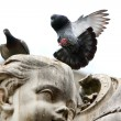 Royalty-Free Stock Photo: Pigeon lands on the statue