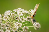 Pomarańczowy motyl — Zdjęcie stockowe