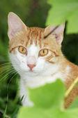 Cat in the bush — Stock Photo