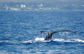 Tail Humpback Whale with island — Stock Photo