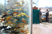 Fish aquarium on a market — Stock Photo