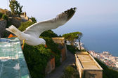 Gull over Gibraltar — Stock Photo