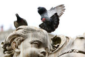 Pigeon lands on the statue — Stock Photo
