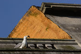 Seagull on top of the roof — Stock Photo