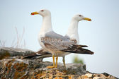 Two seagulls on the wall — Stock Photo