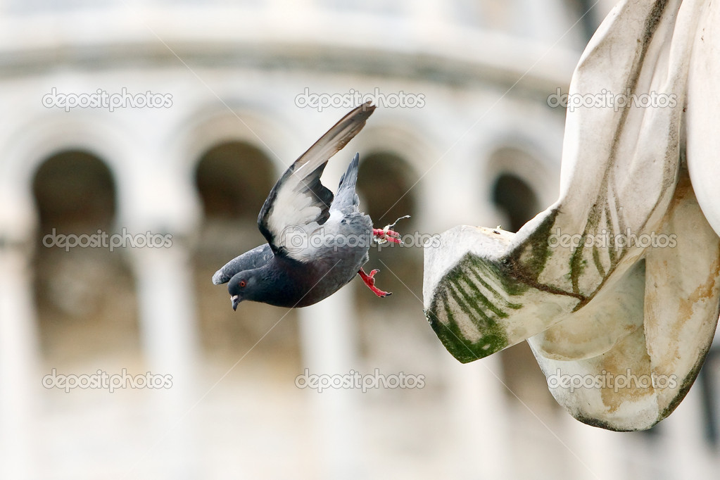 Dove takes off from the statue witch is close to tower of Pisa  Stock Photo #9664393