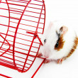 Hamster and Wheel  — Stock Photo