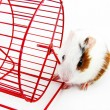 Hamster and Wheel — Stock Photo #9468390