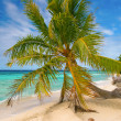 Foto Stock: Palm tree, Fakarava, French Polynesia