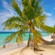 Stock Photo: Palm tree, Fakarava, French Polynesia