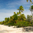 Stock Photo: Paradise beach, Fakarava, French Polynesia