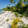 Wild lonely tropical beach on Maupiti, French Polynesia, Society Islands — Stock Photo